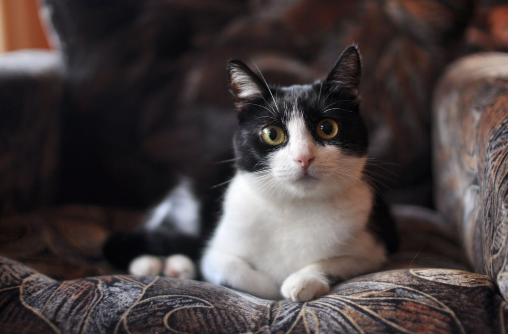 Dokacanie – a może kotek z ulicy?