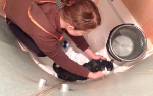 Kąpiel kota w kabinie prysznicowej
