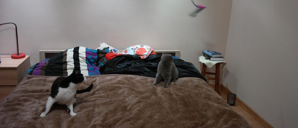 Kocie przyjaźnie