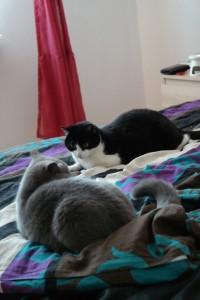 Koteczki są teraz w lepszych nastrojach