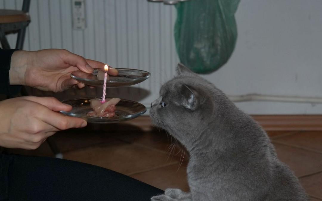 Urodziny Betty! Czyli nasza kulka wkracza w dorosłość :)