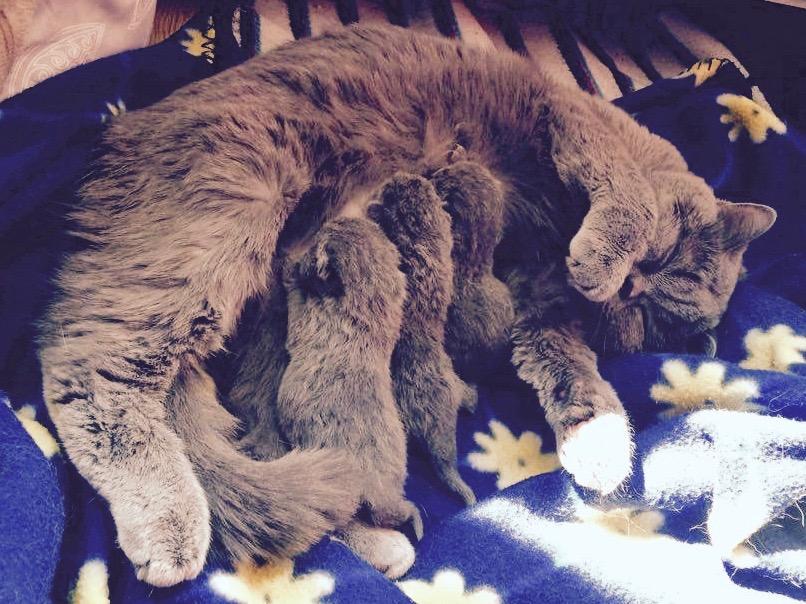 Betty ze swoimi pierwszymi kociętami