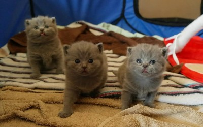 3 tygodnie z kociętami miotu A