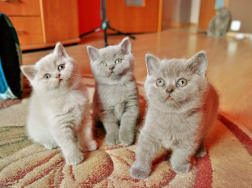 Nasze kochane trio Bubbles, Brandy i Bilbo