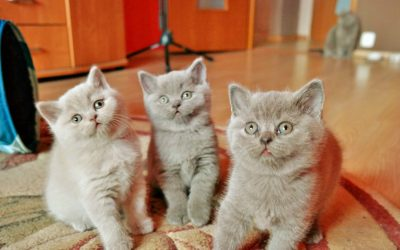 O czym pomyśleć przed przybyciem nowego kotka do domu?